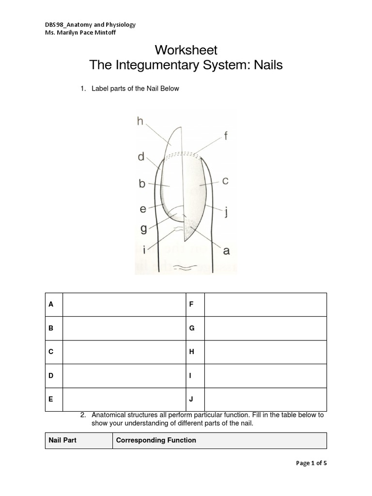 Integumentary System Nails Image collections Human Anatomy Reference – Integumentary System Worksheet