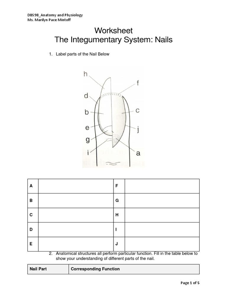 Worksheet Nails | Nail (Anatomy) | Integumentary System