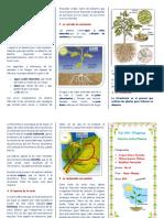 Tripticola Nutrición de Las Plantas