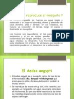 COMO-SE-REPRODUCE-EL-MOSQUITO.pptx