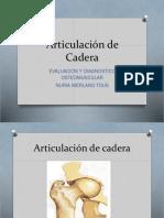Articulacion de Cadera - Rodilla