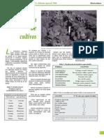 2020.pdf