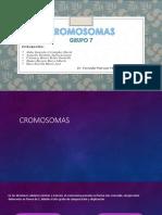 Cromosomas - Grupo 7