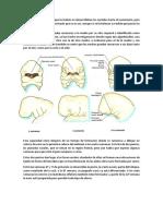 Desarrollo_del_olfato.docx