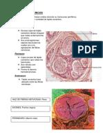Nervios Perifericos y Ganglios