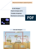 ciclo-n-y-biosintesis-de-aa.ppt