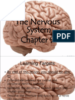 Nervous System Intro NERVES