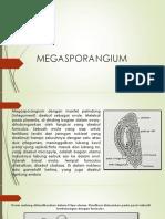 megasporangium