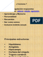 resumen limbico -4