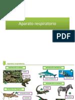 Aparato+respiratorio