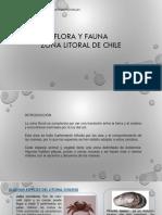 FLORA Y FAUNA DEL LITORAL DE CHILE.pptx