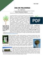 Palmeras.pdf