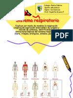 Sistema Respiratorio, 5to