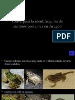 Anfibios en ARAGON