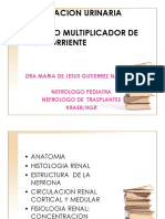 CONCENTRACION URINARIA MMCC