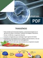 TRANGENESIS.pptx