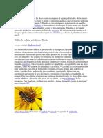Polinizacion.docx