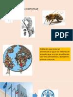 c) Insectos Beneficiosos