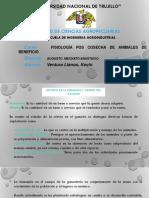 Oferta y Demanda Del Ganado - Fisiologia II