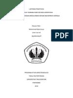 laporan-praktikum-hidroponik