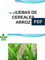 Pruebas de Cereales Arroz