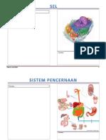 Modul Visual Anatomi