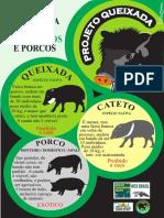 Entenda a Diferença Entre Pecarídeos e Porcos. - Coisas Do Mato