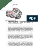 UNIDADES FUNCIONALES DE LURIA.pdf