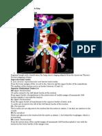 Mediastinum - Lymph Node Map