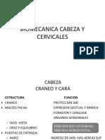 Cabeza y Cervicales