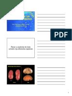 SISTEMA URINÁRIO - AULA.pdf