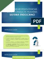 Bases Neurofisiológicas