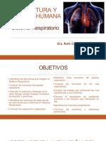 21a Sesión Estructura y Función Sistema Respiratorio 1a parte