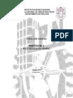 Practica-2-Fisio-Humana.docx