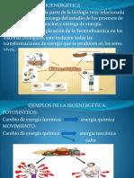 bioenergetica diapu.pptx