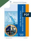 laboratorio mitosis celula vegetal