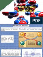 12. Oxidacion Biologica - Copia