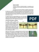 Monografia Plagas, Spodoptera Frugiperda y Sthenaridae Carmelitana