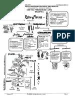 JUEVES - REINO PLANTAE.pdf
