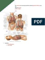 Transcrição slides - Fígado , Pancreas e Baço - PROVA 2.docx