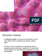 Cnaturales División Celular (Mitosis)