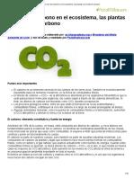 El Ciclo Del Carbono en El Ecosistema, Las Plantas y La Huella de Carbono