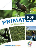 Primates Ingles Baja