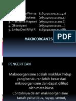 MAKROORGANISME TANAH.pptx
