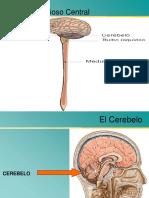 Cerebelo TE Med..pptx