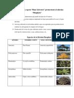 Características de la especie PINOPHYTA.docx