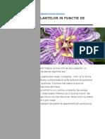 Plante in General-Ingrijire