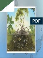 caracteristica manglar