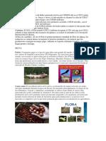 Fauna Flora de La Sierra y Selva