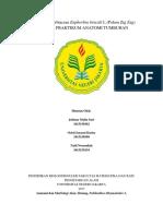 Anatomi Dan Morfologi Pedilanthus Tithymaloides L